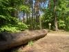 Im Darßer Wald bei Prerow